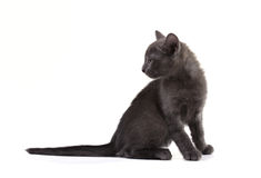 Beautiful black kitten Stock Photos