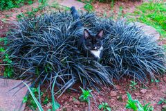 A beautiful black kitty hiding in a decorative flowerbed in the garden royalty free stock photo