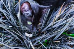 A beautiful black kitty hiding in a decorative flowerbed in the garden stock photos