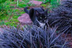 A beautiful black kitty hiding in a decorative flowerbed in the garden royalty free stock photography
