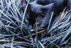A beautiful black kitty hiding in a decorative flowerbed in the garden royalty free stock photos
