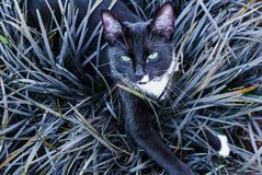 A beautiful black kitty hiding in a decorative flowerbed in the garden stock images