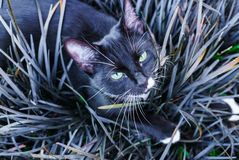 A beautiful black kitty hiding in a decorative flowerbed in the garden stock photo