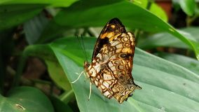 Butterfly. A beautiful black orange butterfly on the leaf with blur background stock photography