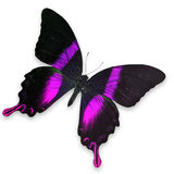 Beautiful Black and Pink butterfly Stock Photos