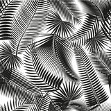 Beautiful black seamless tropical jungle floral pattern background with palm leaves stock images
