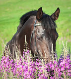 Beautiful  black stallion in flower Stock Images