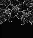 Beautiful black-and-white background with lilies, hand-drawn. Royalty Free Stock Photos