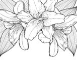 Beautiful black-and-white background with lilies, hand-drawn Royalty Free Stock Photo