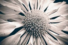 Beautiful, Black-and-white, Bloom Stock Image