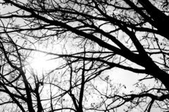 Beautiful black and white branch with a bad weather royalty free stock images