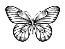 Beautiful black and white butterfly Stock Photos