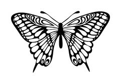 Beautiful black and white butterfly isolated on white Royalty Free Stock Photos