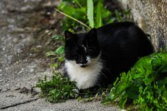Beautiful black white cat sits on concrete.Domestic animal.Outdoor. Beautiful black white cat sits on concrete .Domestic animal kitten pet cute fur young mammal stock image
