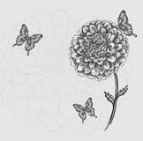 Beautiful black-and-white flower with butterflies vector illustration