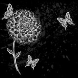 Beautiful black-and-white flower with butterflies. Royalty Free Stock Image
