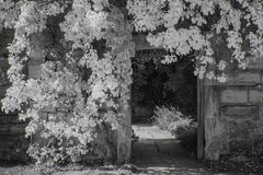 Beautiful black and white landscape of foliage covering doorway Royalty Free Stock Images