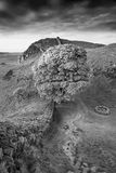 Beautiful black and white landscape image of Sycamore Gap at Had. Stunning black and white landscape image of Sycamore Gap at Hadrian`s Wall in Northumberland at Royalty Free Stock Images