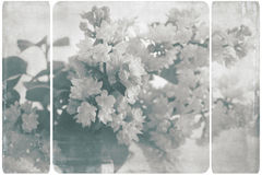 Beautiful black and white lilacs Royalty Free Stock Photos