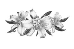 Beautiful black and white lily composition. Bouquet of flowers. Floral print. Marker drawing. stock image