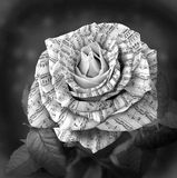 Beautiful black and white rose with note on the petals Royalty Free Stock Photography