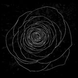 Beautiful black and white rose outline with gray spots on a black background. Stock Photos