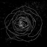 Beautiful black and white rose outline with gray spots on a black background. Stock Images