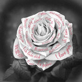 Beautiful black and white rose with words Royalty Free Stock Photography