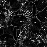 Beautiful black and white seamless pattern in alstroemeria with contours. Stock Images