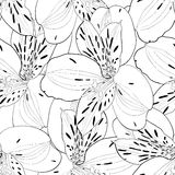 Beautiful black and white seamless pattern in alstroemeria with contours. Stock Photos