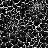Beautiful black and white seamless pattern in  dahlia Stock Image