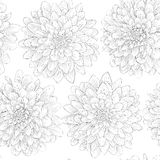 Beautiful black and white seamless pattern in  dahlia Stock Images