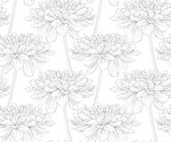 Beautiful black and white seamless pattern in dahlia. Royalty Free Stock Photos