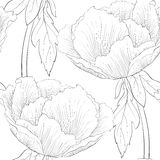 Beautiful black and white seamless pattern flowers. Royalty Free Stock Photography