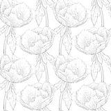 Beautiful black and white seamless pattern flowers. Stock Photos
