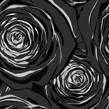Beautiful black and white seamless pattern in roses Royalty Free Stock Photos