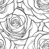 Beautiful black and white seamless pattern in roses with contours Stock Photography