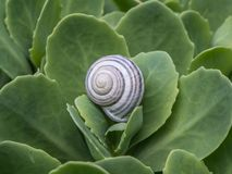Black and white snail detail royalty free stock images