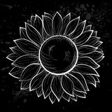 Beautiful black and white sunflower isolated. Royalty Free Stock Photography