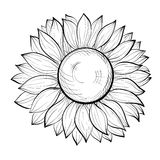 Beautiful black and white sunflower isolated on white background Stock Image