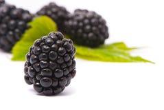 Free Beautiful Blackberries. Stock Photography - 10466102