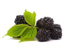 Beautiful blackberries Royalty Free Stock Image