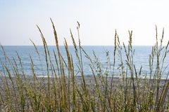 Blades of grass against the blue sea stock image