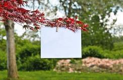 Beautiful Blank sign Royalty Free Stock Photo
