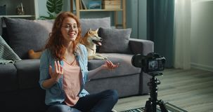 Beautiful blogger and cute dog recording video using camera at home talking. Beautiful blogger and cute shiba inu dog recording video using camera at home stock footage