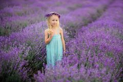 Beautiful girl on the lavender field stock photos
