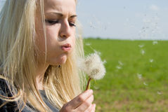 Beautiful blonde blow away dandelion Royalty Free Stock Image