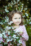 Beautiful blonde blue-eyed girl. In a flowering apple orchard stock photography