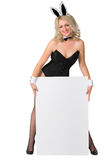 Beautiful blonde in a bunny suit with banner on white background Royalty Free Stock Images