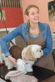 Beautiful blonde dog groomer at work stock images